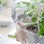 17 Edible Plants You Can Grow Indoors In The Winter